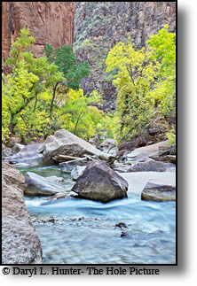 Virgin River, Autumn Color, Zion National Park